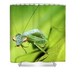 Baby Praymantes 6677 Shower Curtain