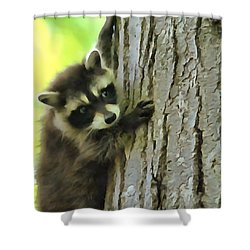 Baby Raccoon In A Tree Shower Curtain by Dan Sproul