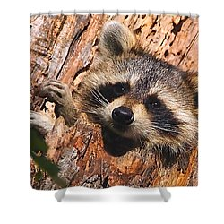 Baby Raccoon Shower Curtain by William Jobes
