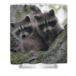 Baby Raccoons In A Tree Shower Curtain by Dan Sproul