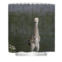 Baby Sandhill Crane Shower Curtain