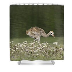 Baby Sandhill Crane Walking Through Wildflowers Shower Curtain