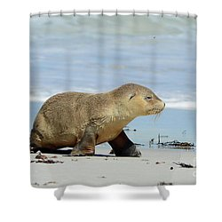 Baby Sea Lion On Seals Bay Shower Curtain