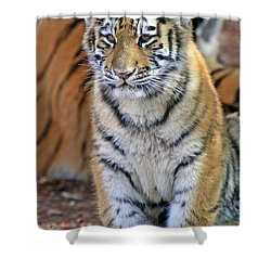 Baby Stripes Shower Curtain by Scott Mahon
