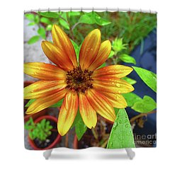 Baby Sunflower Grace Shower Curtain