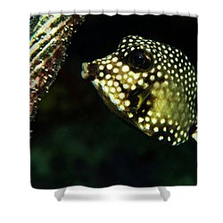 Baby Trunk Fish Shower Curtain by Jean Noren
