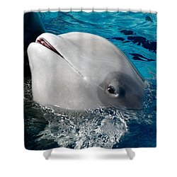 Baby Whale Shower Curtain by Bob Pardue