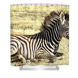 Baby Zebra Shower Curtain