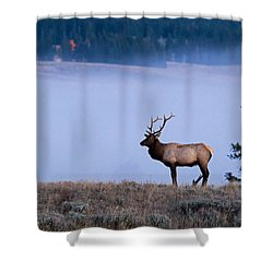 Bachelor Days Shower Curtain