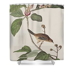 Bachmans Sparrow Shower Curtain by John James Audubon