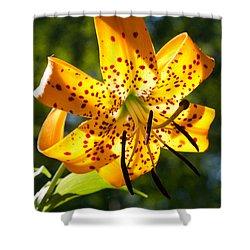 Back-lit Yellow Tiger Lily Shower Curtain by John Haldane