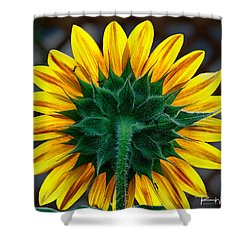 Back Of Sunflower Shower Curtain