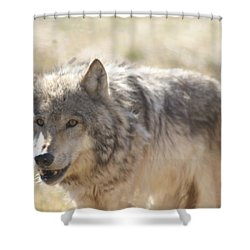 Back Off Buddy Shower Curtain