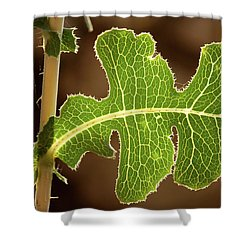 Back Side Light On A Leaf At Sunset Shower Curtain by Yoel Koskas