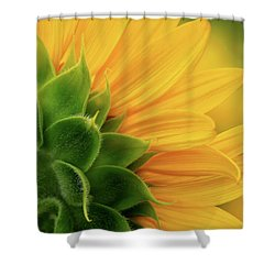 Back View Of Sunflower Shower Curtain