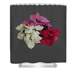Background Choice-pointsettias Shower Curtain