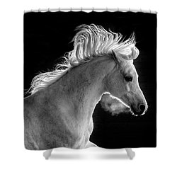 Backlit Arabian Shower Curtain by Wes and Dotty Weber