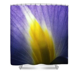 Backlit Iris Flower Petal Close Up Purple And Yellow Shower Curtain