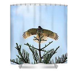 Backlit Landing Hawk Shower Curtain