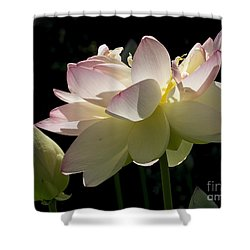 Backlit Lotus Blossom Shower Curtain