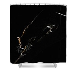 Backlit Ocelot Shower Curtain by Wade Aiken