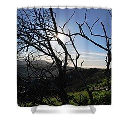 Shower Curtain featuring the photograph Backlit Trees Overlooking Hillside by Matt Harang