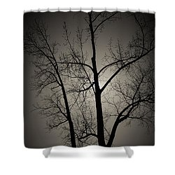 Backlit Trees Shower Curtain