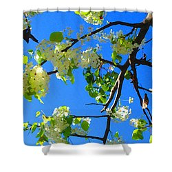 Backlit White Tree Blossoms Shower Curtain by Amy Vangsgard