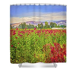 Backroad Beauty In Southern California Shower Curtain