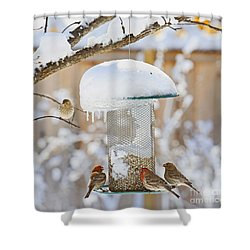 Backyard Birds Shower Curtain
