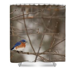 Backyard Blue Shower Curtain