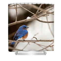 Backyard Bluebird Shower Curtain
