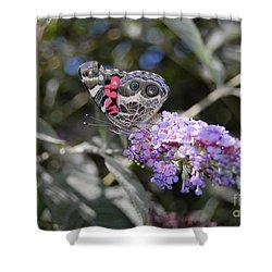 Backyard Buckeye Butterfly Shower Curtain by Debra Thompson
