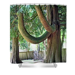 Backyard Cedar Shower Curtain