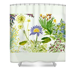 Backyard Study Shower Curtain by Anne Marie Brown