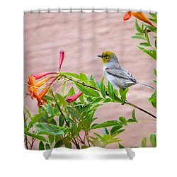 Shower Curtain featuring the photograph Backyard Verdin by Dan McManus