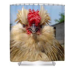 Bad Tempered Bearded Bantam Shower Curtain