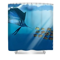 Bahama Beauty Shower Curtain by Corey Ford