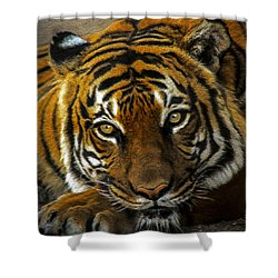 Shower Curtain featuring the mixed media Baheem Bored by Elaine Malott