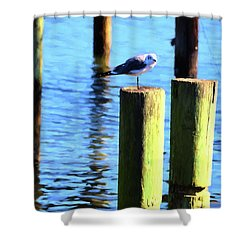 Shower Curtain featuring the photograph Balanced by Jan Amiss Photography