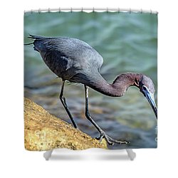 Balancing For Breakfast Shower Curtain