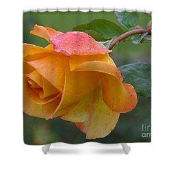 Balboa Rose Shower Curtain