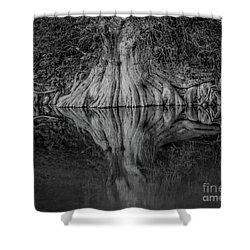 Bald Cypress Reflection In Black And White Shower Curtain