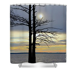 Bald Cypress Silhouette Shower Curtain