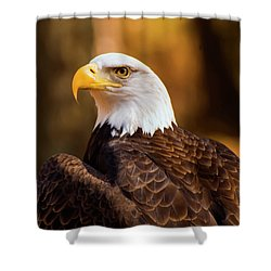 Bald Eagle 2 Shower Curtain by Chris Flees