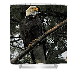 Shower Curtain featuring the photograph Bald Eagle by Glenn Gordon