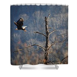 Bald Eagle At Boxley Mill Pond Shower Curtain by Michael Dougherty