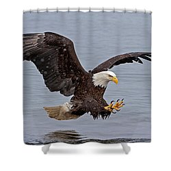 Bald Eagle Diving For Fish In Falling Snow Shower Curtain
