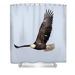 Bald Eagle Flying Over Horicon Marsh Shower Curtain