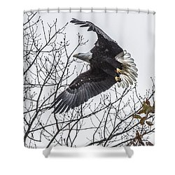 Bald Eagle Flying Shower Curtain